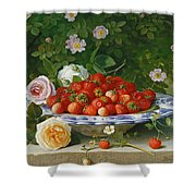 Strawberries In A Blue And White Buckelteller With Roses And Sweet Briar On A Ledge Shower Curtain by William Hammer