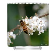Study Of A Bee Shower Curtain by Maria Urso