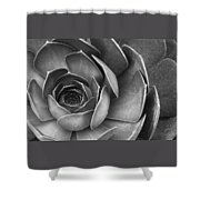 Succulent In Black And White Shower Curtain by Ben and Raisa Gertsberg