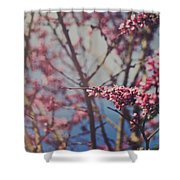 Sugar Shower Curtain by Laurie Search