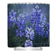 summer dream Shower Curtain by Priska Wettstein