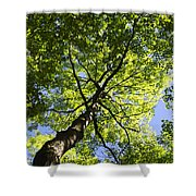Summer Tree Canopy Landscape Shower Curtain by Christina Rollo