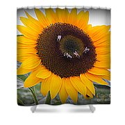 Summertime Beauty - Sunflower Shower Curtain by Photographic Art and Design by Dora Sofia Caputo
