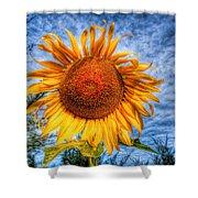 Sun Flower Shower Curtain by Adrian Evans