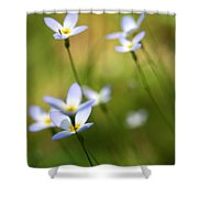 Sun Searching  Shower Curtain by Neal  Eslinger