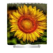 Sunflower Shower Curtain by Adrian Evans