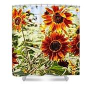 Sunflower Cluster Shower Curtain by Kerri Mortenson