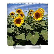 Sunflower Field Shower Curtain by Kerri Mortenson