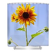 Sunflower In The Sky Shower Curtain by Kerri Mortenson