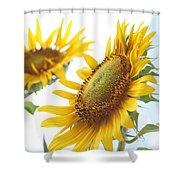 Sunflower Perspective Shower Curtain by Kerri Mortenson