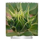 Sunflower Pod Shower Curtain by Kerri Mortenson