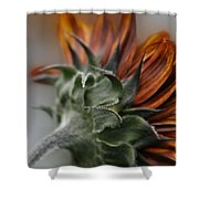 Sunflower Shower Curtain by Sharon Mau