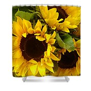 Sunflowers Shower Curtain by Amy Vangsgard