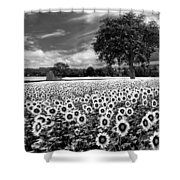 Sunflowers In Black And White Shower Curtain by Debra and Dave Vanderlaan
