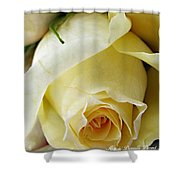 Sunkissed Yellow Rose Shower Curtain by Danielle  Parent