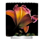 Sunlit Lily Shower Curtain by Rona Black