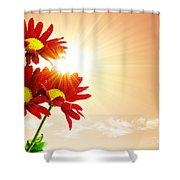 Sunrays Flowers Shower Curtain by Carlos Caetano