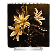 Sunrise Ajo Lily Shower Curtain by Robert Bales