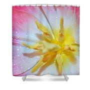 Sunrise Tulip Shower Curtain by Felicia Tica