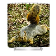Surprise Mister Squirrel Shower Curtain by Shawna Rowe