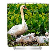 Swan Song Shower Curtain by Frozen in Time Fine Art Photography