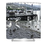 Swans And Ducks In Lake Lucerne In Switzerland Shower Curtain by Ashish Agarwal