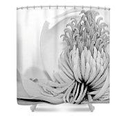 Sweet Magnolia Shower Curtain by Sabrina L Ryan
