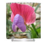 Sweet Tiny Wildflower Shower Curtain by Lainie Wrightson