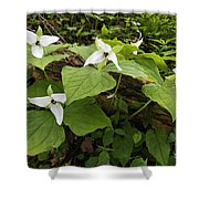Sweet White Trillium - D003800 Shower Curtain by Daniel Dempster