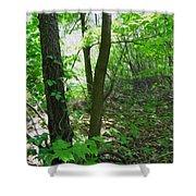 Swirled Forest 1 - Digital Painting Effect Shower Curtain by Rhonda Barrett