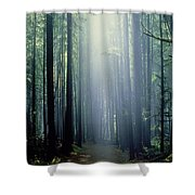 T. Bonderud Path Through Trees In Mist Shower Curtain by First Light