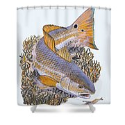 Tailing Redfish Shower Curtain by Carey Chen