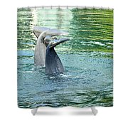 Tails Shower Curtain by Cheryl Young