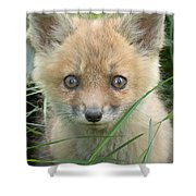 Take Me Home Shower Curtain by Everet Regal