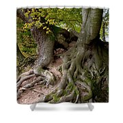 Taking Root Shower Curtain by Heiko Koehrer-Wagner