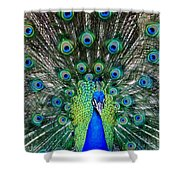 TALK of the WALK Shower Curtain by KAREN WILES