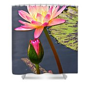 Tall Waterlily Beauty Shower Curtain by Byron Varvarigos
