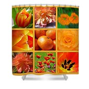 Tangerine Dream Window Shower Curtain by Joan-Violet Stretch