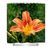 Tangerine Lily Shower Curtain by Will Borden