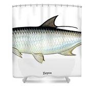 Tarpon Shower Curtain by Charles Harden