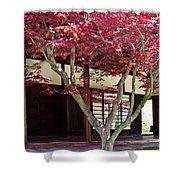 Tea House Thru The Maple Shower Curtain by Tom Gari Gallery-Three-Photography