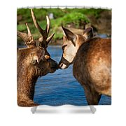 Tender Kiss. Deer In The Pamplemousse Botanical Garden. Mauritius Shower Curtain by Jenny Rainbow