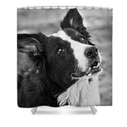 Tessie 9 Shower Curtain by Rich Franco