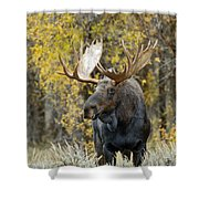 Teton Bull Moose Shower Curtain by Gary Langley