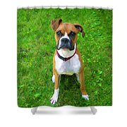 The Boxer Shower Curtain by Donna Doherty