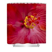 The Expression Of Love Shower Curtain by Sharon Mau