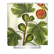 The Fig Tree Shower Curtain by Elizabeth Blackwell