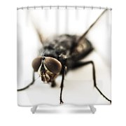 The Fly Shower Curtain by Marco Oliveira