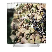 The Grapevines Shower Curtain by Lisa Russo