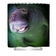 THE HAPPY MANATEE Shower Curtain by KAREN WILES